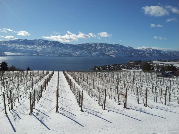 Okanagan winter winery